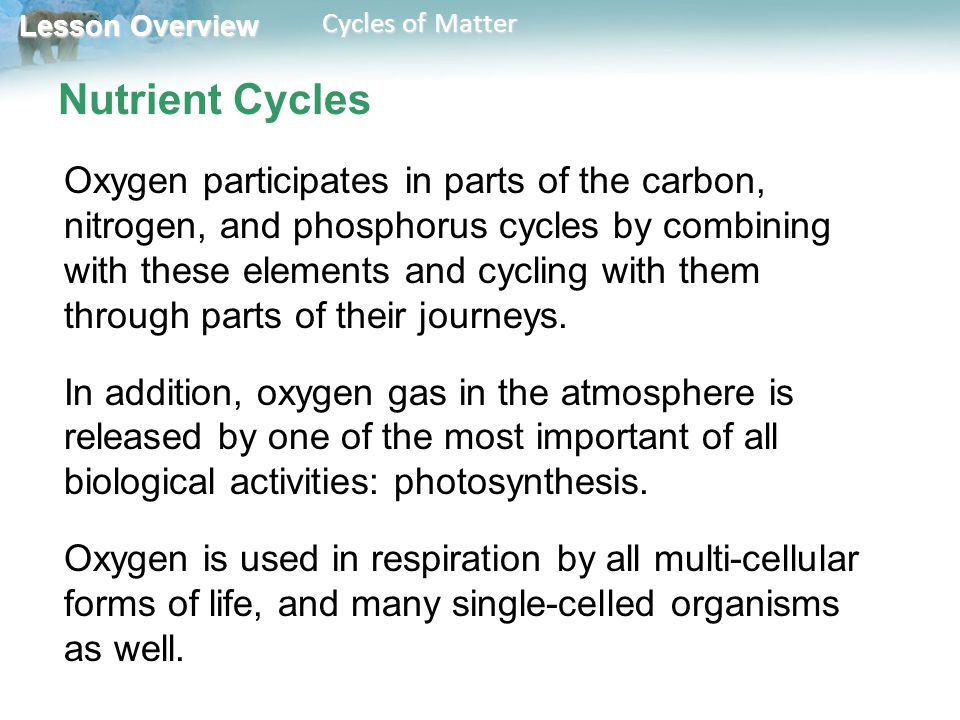 Lesson Overview Lesson Overview Cycles of Matter Nutrient Cycles Oxygen participates in parts of the carbon, nitrogen, and phosphorus cycles by combin