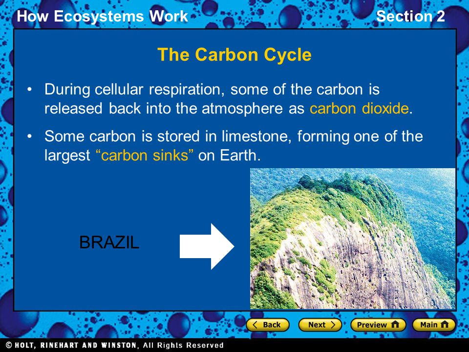 How Ecosystems WorkSection 2 The Carbon Cycle During cellular respiration, some of the carbon is released back into the atmosphere as carbon dioxide.
