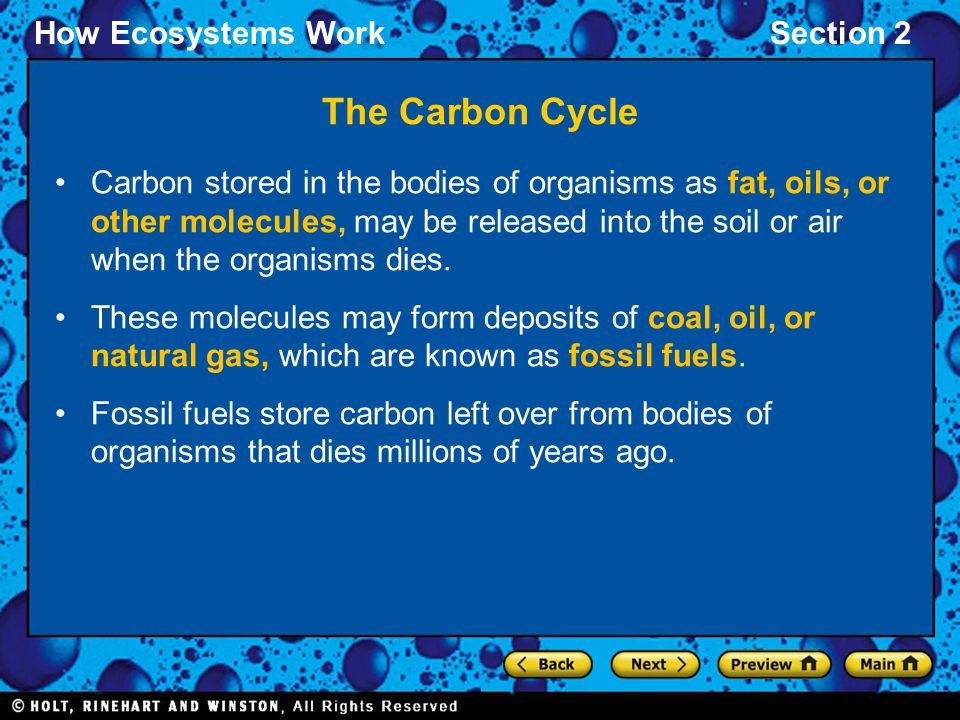 How Ecosystems WorkSection 2 The Carbon Cycle Carbon stored in the bodies of organisms as fat, oils, or other molecules, may be released into the soil