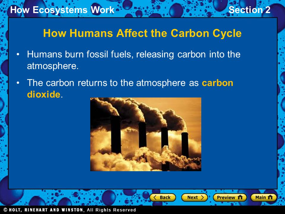 How Ecosystems WorkSection 2 Humans burn fossil fuels, releasing carbon into the atmosphere. The carbon returns to the atmosphere as carbon dioxide. H