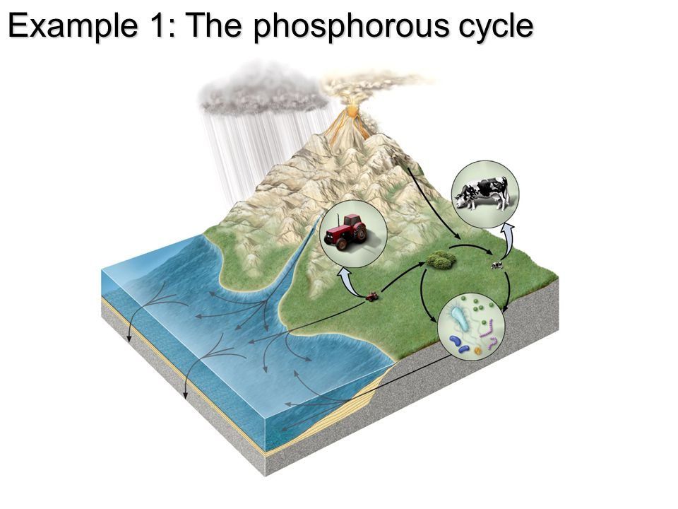 Example 1: The phosphorous cycle