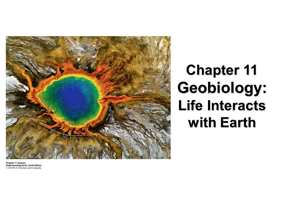 Chapter 11 Geobiology: Life Interacts with Earth