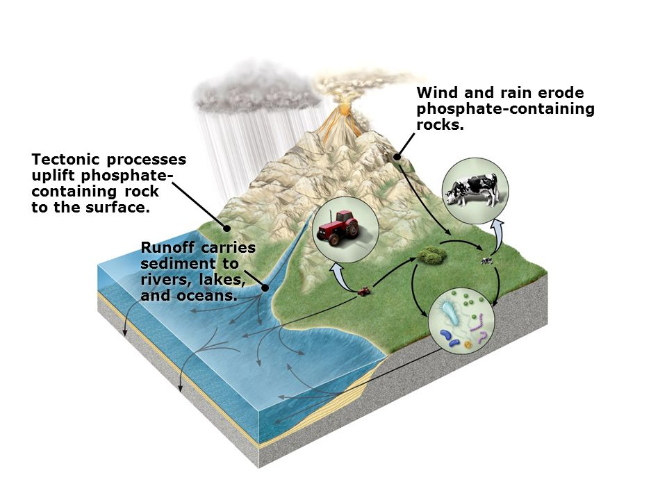Runoff carries sediment to rivers, lakes, and oceans.
