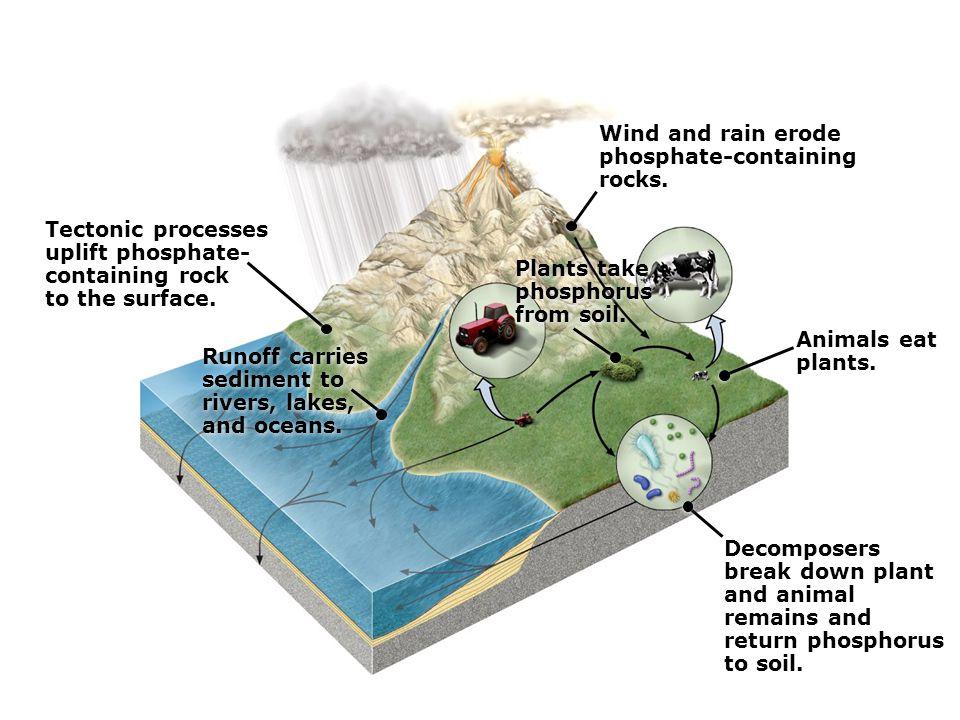 Plants take phosphorus from soil. Plants take phosphorus from soil.