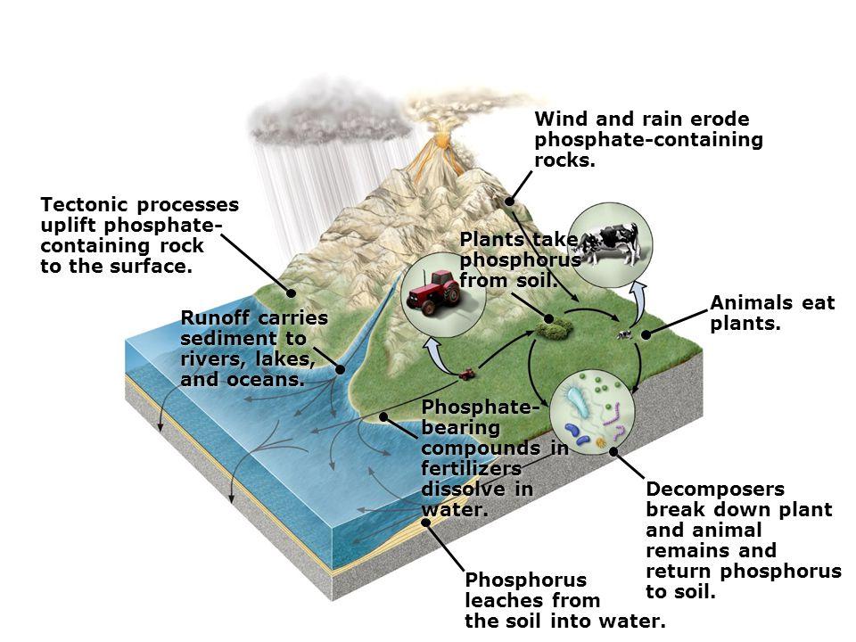 Plants take phosphorus from soil.Plants take phosphorus from soil.
