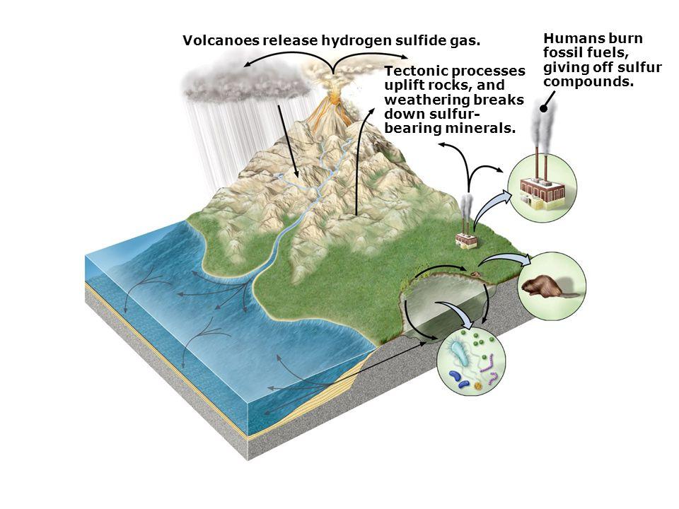 Volcanoes release hydrogen sulfide gas.