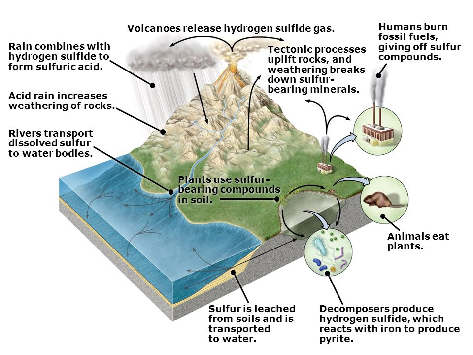 Rain combines with hydrogen sulfide to form sulfuric acid.