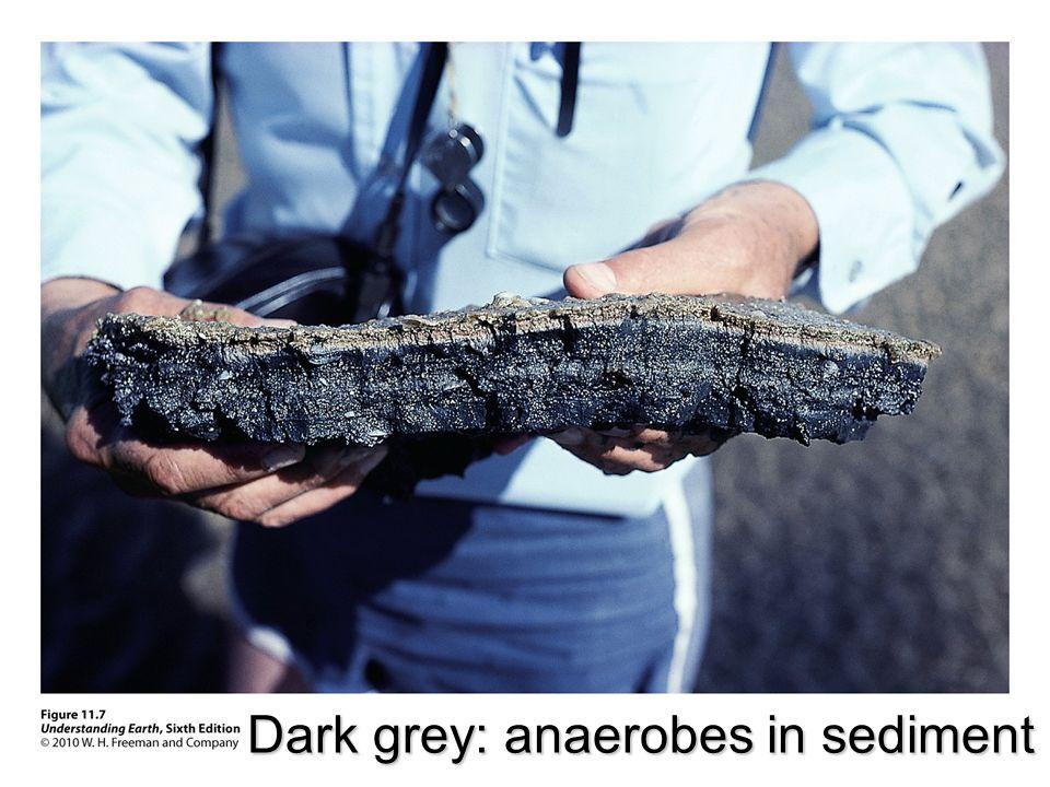 Dark grey: anaerobes in sediment