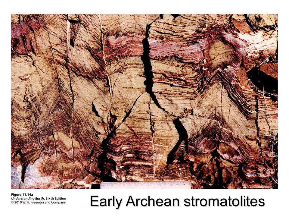 Early Archean stromatolites