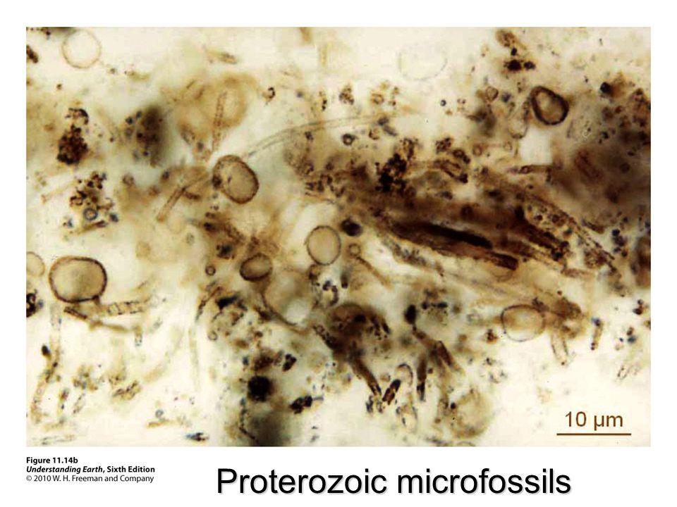 Proterozoic microfossils