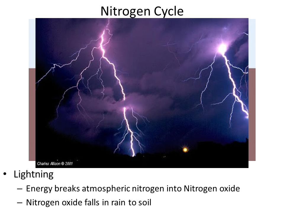 Nitrogen Cycle Decomposers – Return ammonia to soil by feeding on dead matter Ammonia