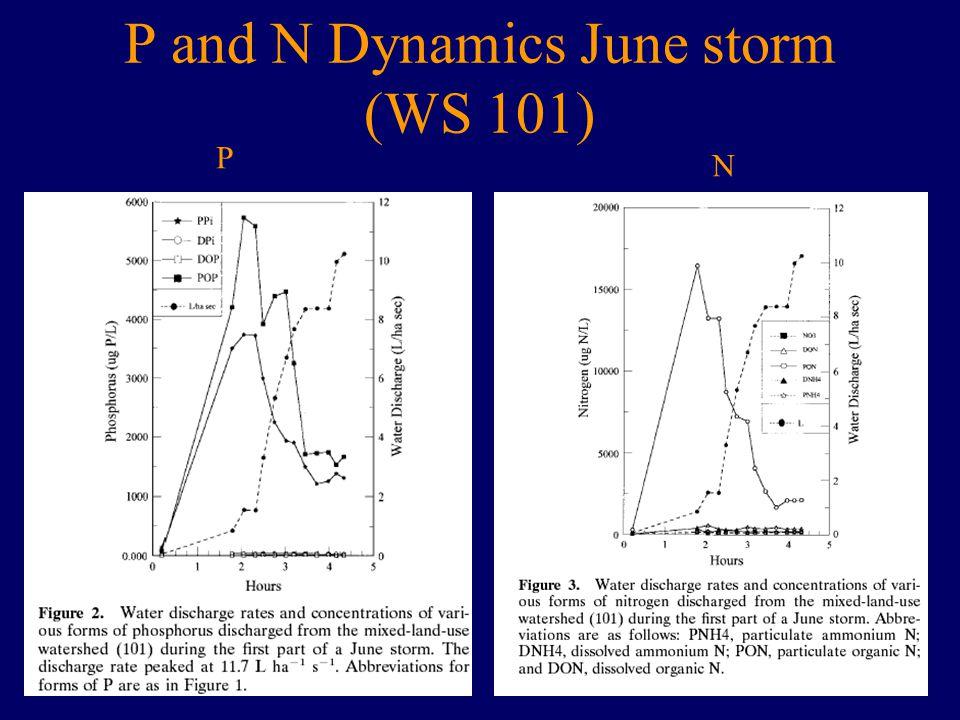 P and N Dynamics June storm (WS 101) P N