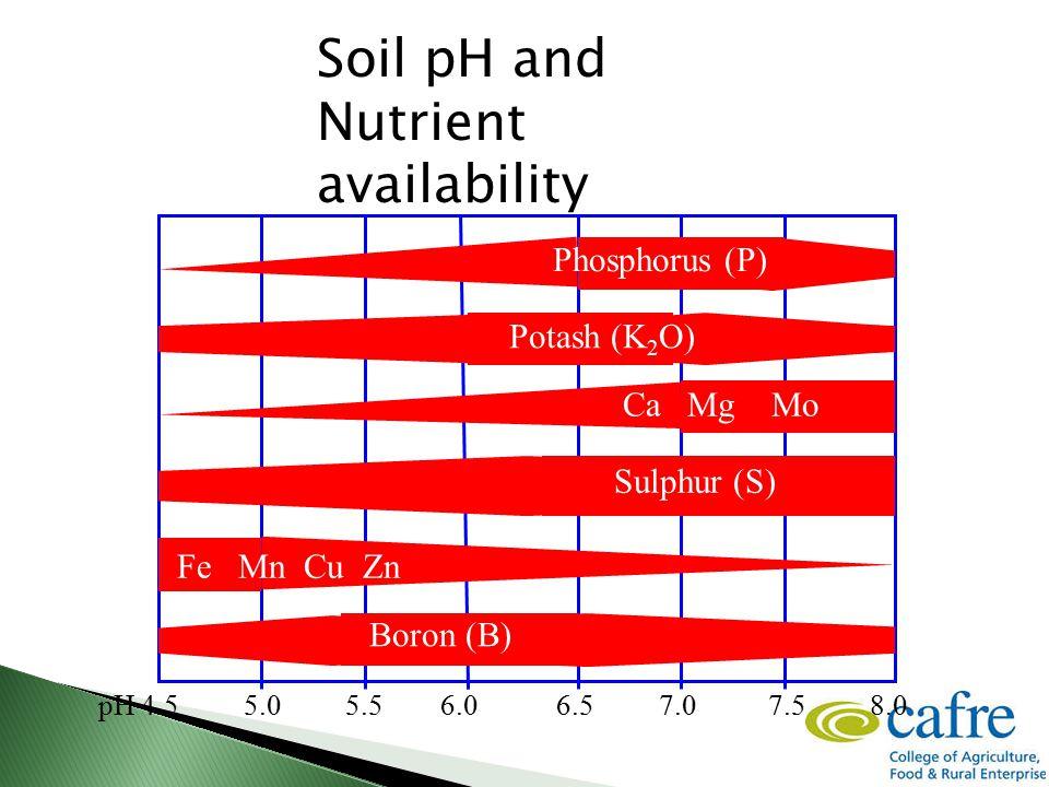 pH 4.5 5.0 5.5 6.0 6.5 7.0 7.5 8.0 Phosphorus (P) Potash (K 2 O) Ca Mg Mo Sulphur (S) Fe Mn Cu Zn Boron (B) Soil pH and Nutrient availability