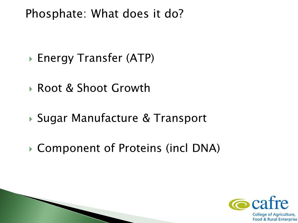 Phosphate: What does it do?