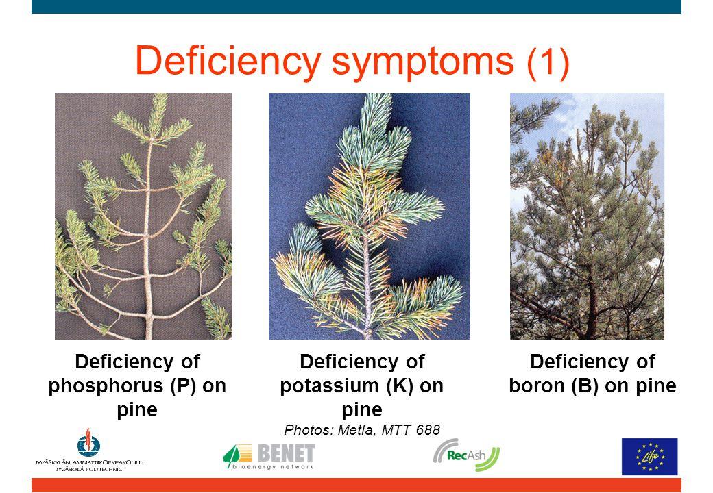 Deficiency of phosphorus (P) on pine Deficiency of potassium (K) on pine Photos: Metla, MTT 688 Deficiency of boron (B) on pine Deficiency symptoms (1)