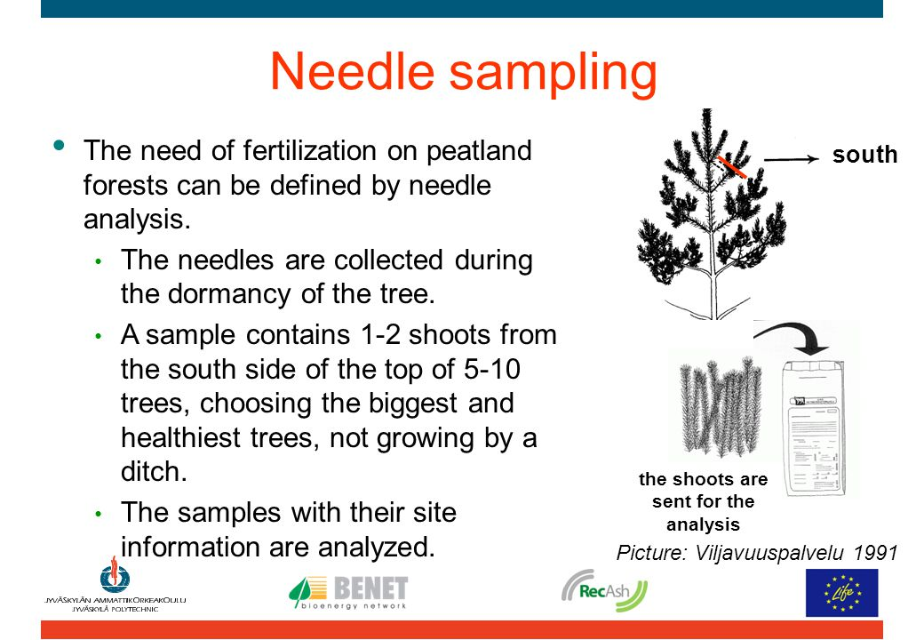 Needle sampling The need of fertilization on peatland forests can be defined by needle analysis. The needles are collected during the dormancy of the