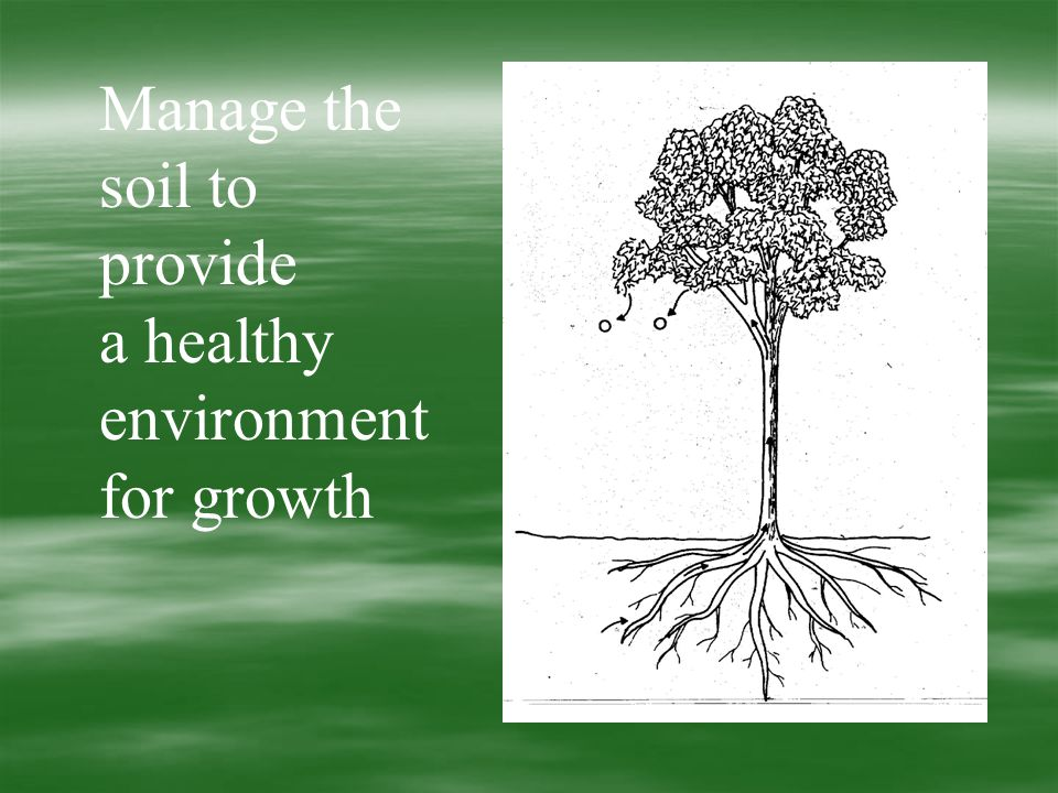 Manage the soil to provide a healthy environment for growth