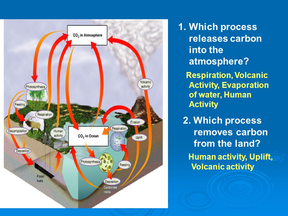 1.Which process releases carbon into the atmosphere? 2. Which process removes carbon from the land? Respiration, Volcanic Activity, Evaporation of wat