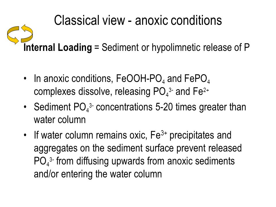 Classical view - anoxic conditions Internal Loading = Sediment or hypolimnetic release of P In anoxic conditions, FeOOH-PO 4 and FePO 4 complexes dissolve, releasing PO 4 3- and Fe 2+ Sediment PO 4 3- concentrations 5-20 times greater than water column If water column remains oxic, Fe 3+ precipitates and aggregates on the sediment surface prevent released PO 4 3- from diffusing upwards from anoxic sediments and/or entering the water column