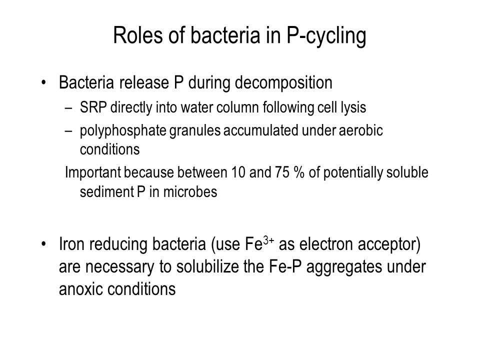 Roles of bacteria in P-cycling Bacteria release P during decomposition –SRP directly into water column following cell lysis –polyphosphate granules ac