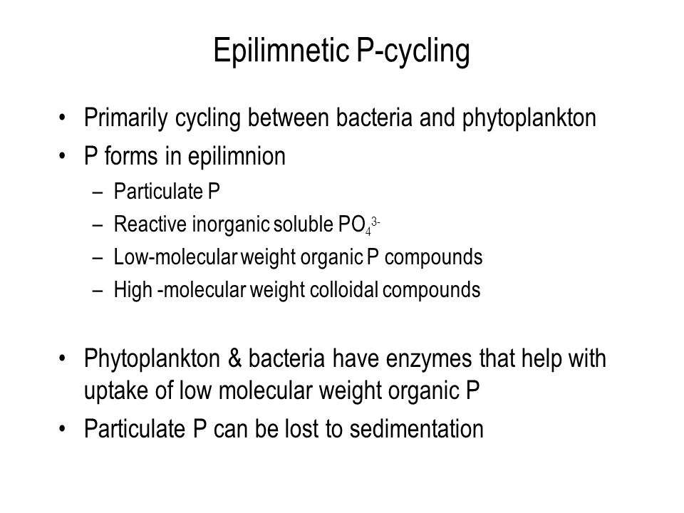 Epilimnetic P-cycling Primarily cycling between bacteria and phytoplankton P forms in epilimnion –Particulate P –Reactive inorganic soluble PO 4 3- –Low-molecular weight organic P compounds –High -molecular weight colloidal compounds Phytoplankton & bacteria have enzymes that help with uptake of low molecular weight organic P Particulate P can be lost to sedimentation