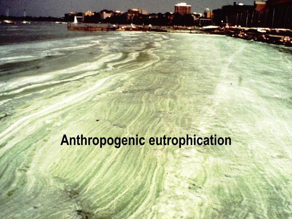 Anthropogenic eutrophication