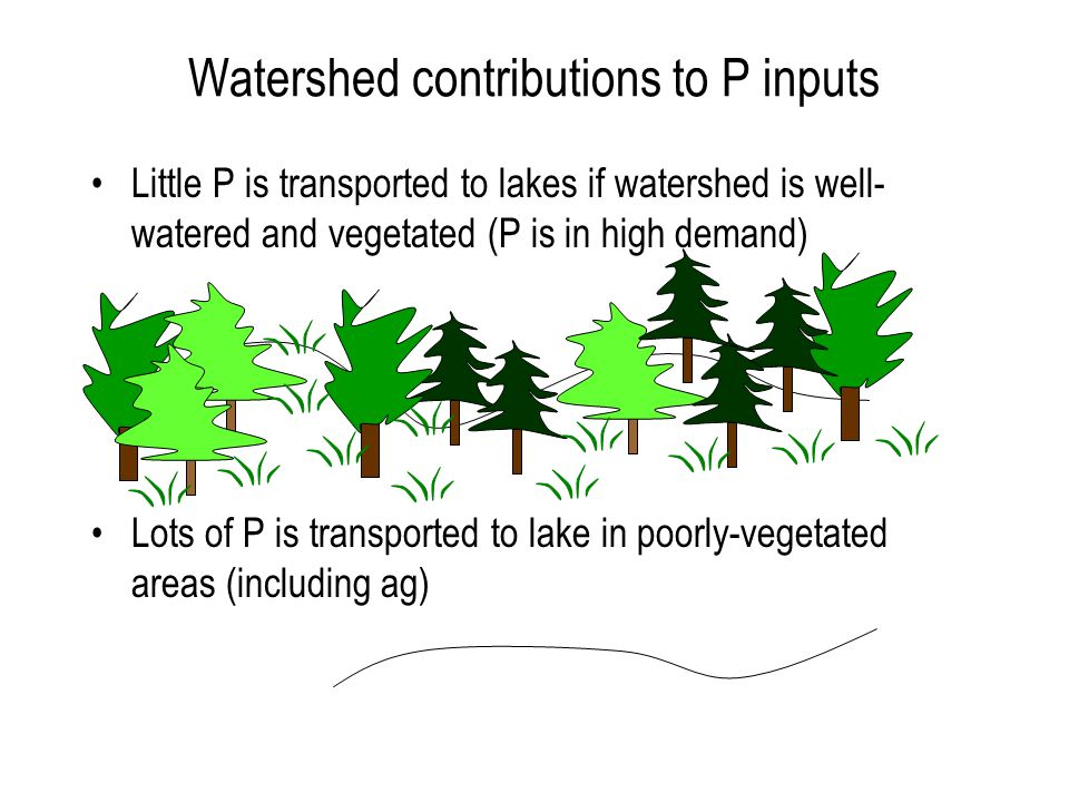 Watershed contributions to P inputs Little P is transported to lakes if watershed is well- watered and vegetated (P is in high demand) Lots of P is transported to lake in poorly-vegetated areas (including ag)