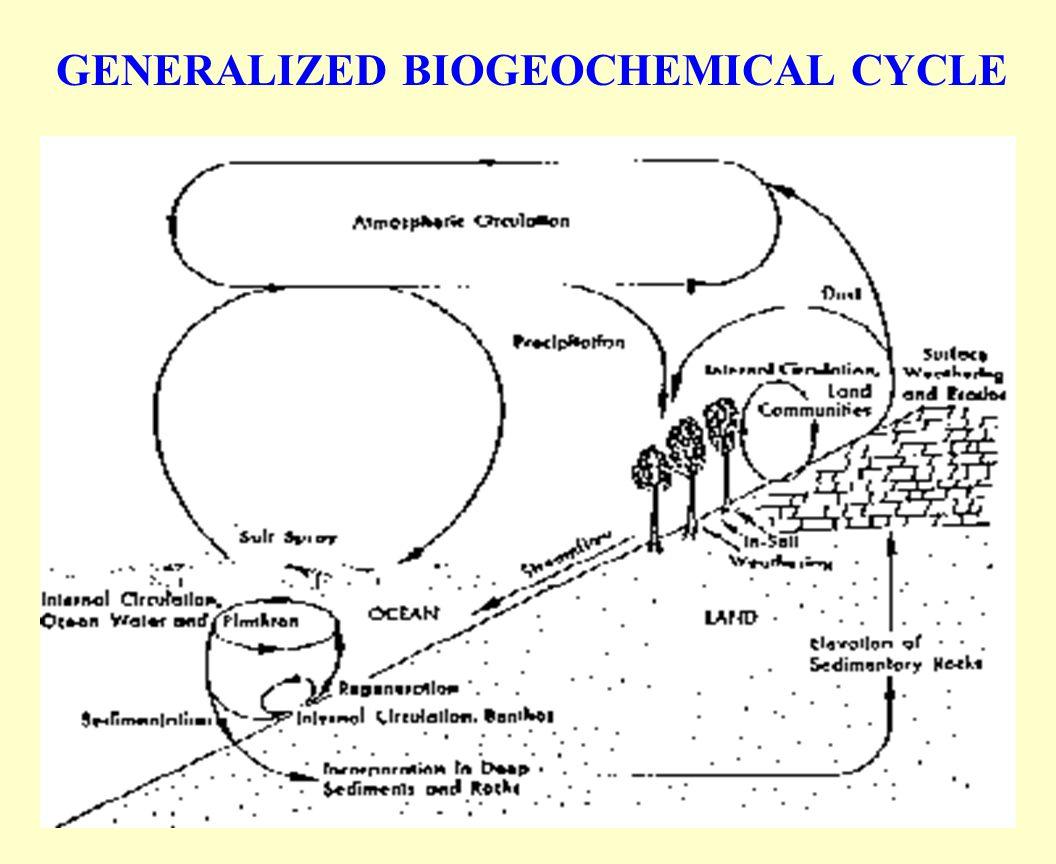 GENERALIZED BIOGEOCHEMICAL CYCLE