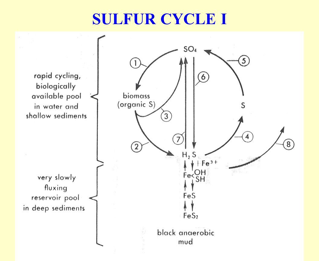SULFUR CYCLE I