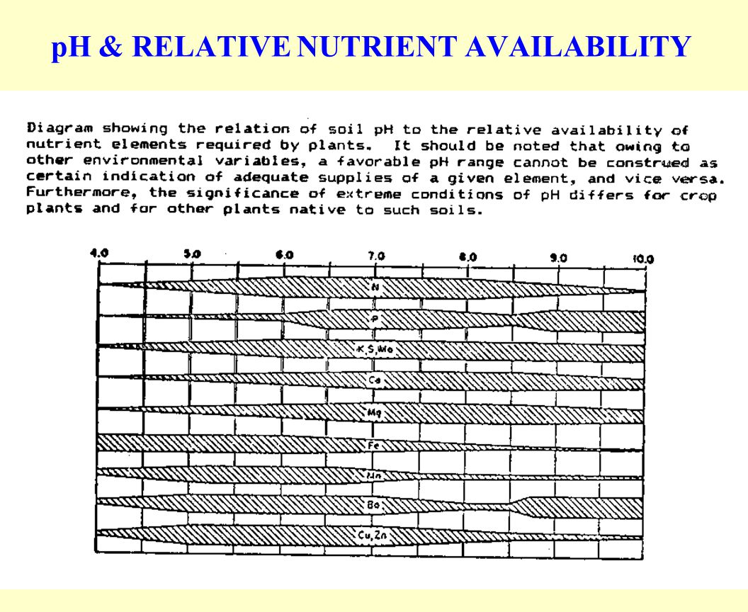pH & RELATIVE NUTRIENT AVAILABILITY