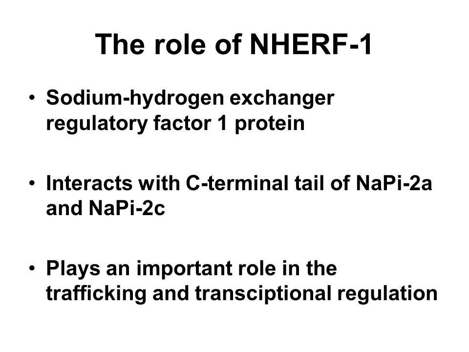 The role of NHERF-1 Sodium-hydrogen exchanger regulatory factor 1 protein Interacts with C-terminal tail of NaPi-2a and NaPi-2c Plays an important rol
