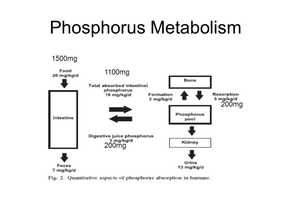 Phosphorus Metabolism 1500mg 1100mg 200mg