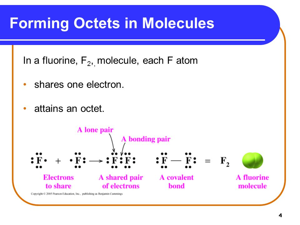 4 Forming Octets in Molecules In a fluorine, F 2,, molecule, each F atom shares one electron. attains an octet.