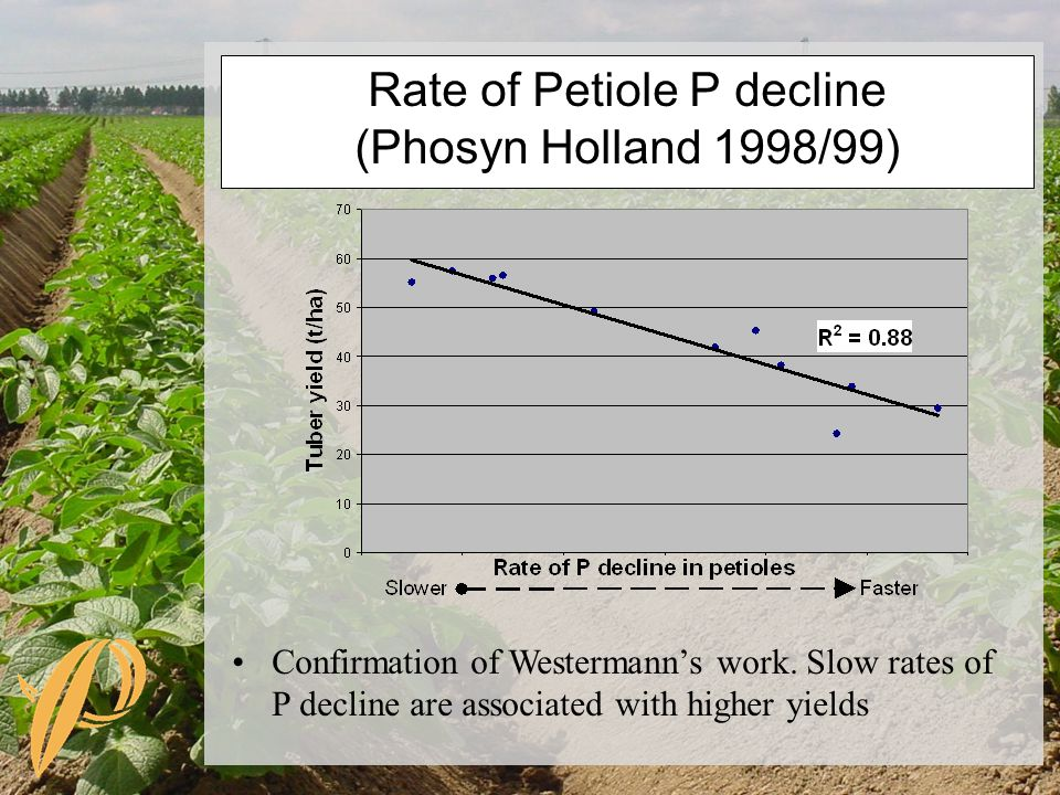 Rate of Petiole P decline (Phosyn Holland 1998/99) Confirmation of Westermann's work.