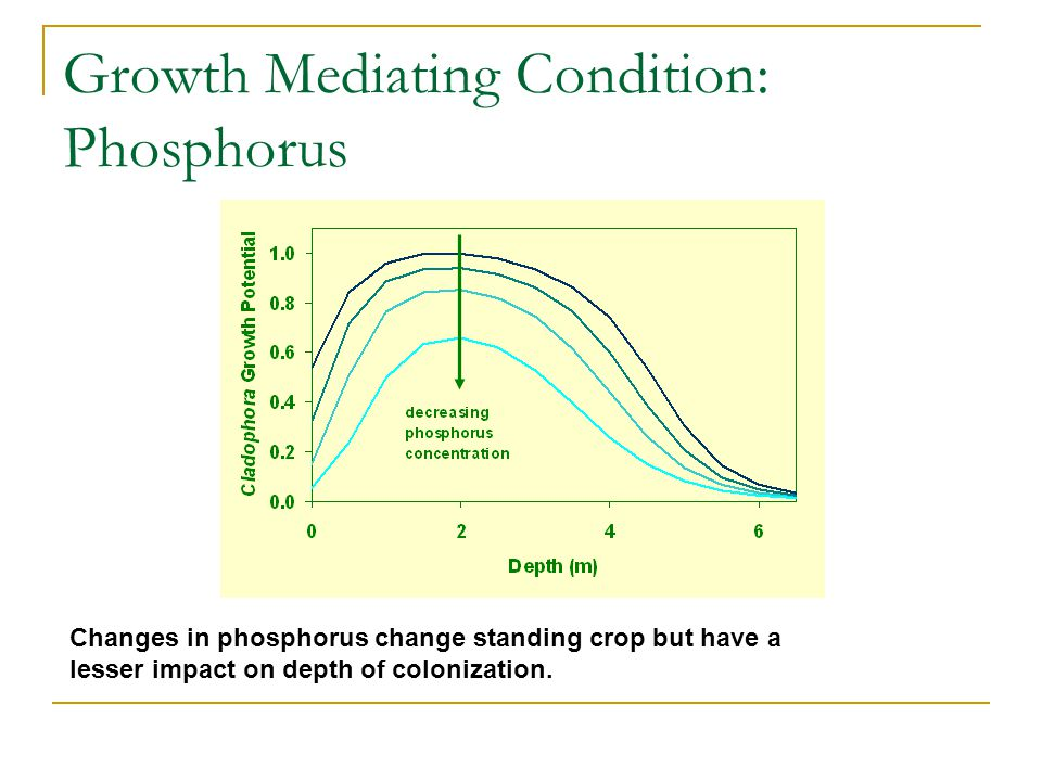 Growth Mediating Condition: Phosphorus Changes in phosphorus change standing crop but have a lesser impact on depth of colonization.