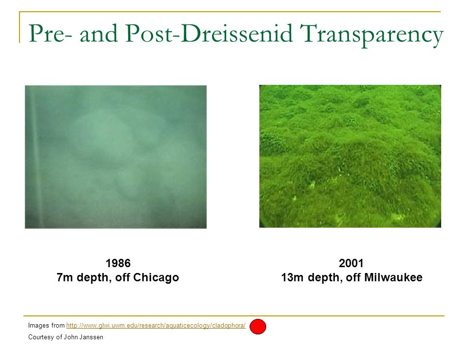 Pre- and Post-Dreissenid Transparency 1986 7m depth, off Chicago 2001 13m depth, off Milwaukee Images from http://www.glwi.uwm.edu/research/aquaticecology/cladophora/http://www.glwi.uwm.edu/research/aquaticecology/cladophora/ Courtesy of John Janssen