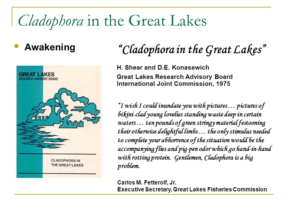 Cladophora in the Great Lakes  Awakening Cladophora in the Great Lakes H.
