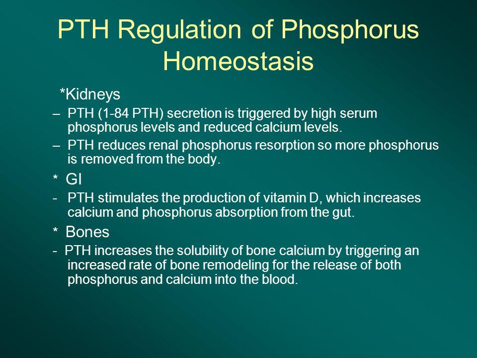 PTH Regulation of Phosphorus Homeostasis *Kidneys –PTH (1-84 PTH) secretion is triggered by high serum phosphorus levels and reduced calcium levels.