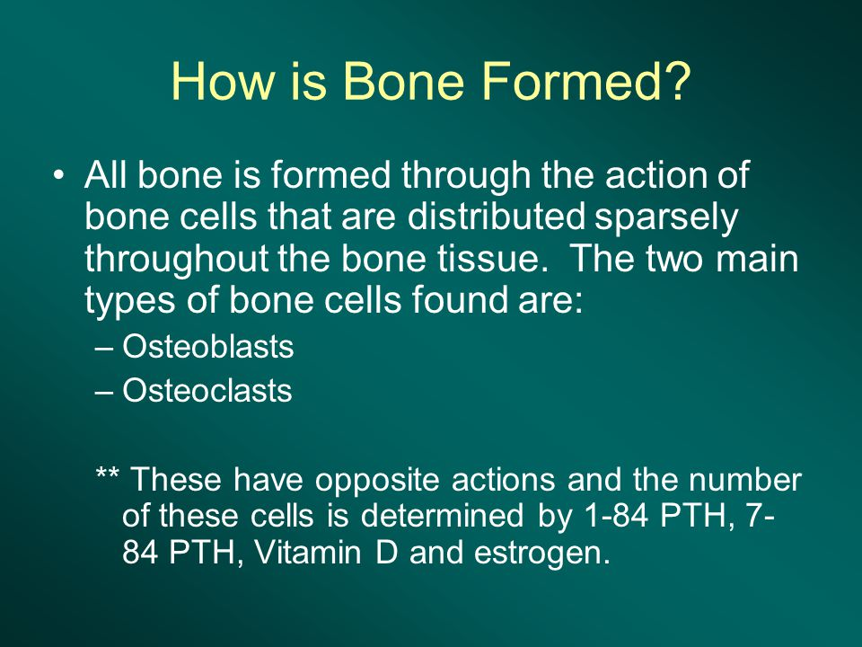 How is Bone Formed.