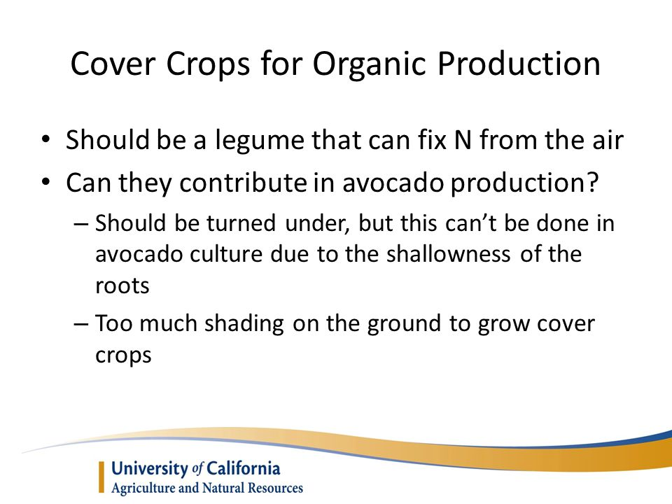 Cover Crops for Organic Production Should be a legume that can fix N from the air Can they contribute in avocado production.