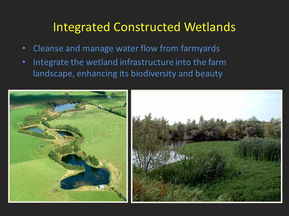 Integrated Constructed Wetlands Cleanse and manage water flow from farmyards Integrate the wetland infrastructure into the farm landscape, enhancing its biodiversity and beauty