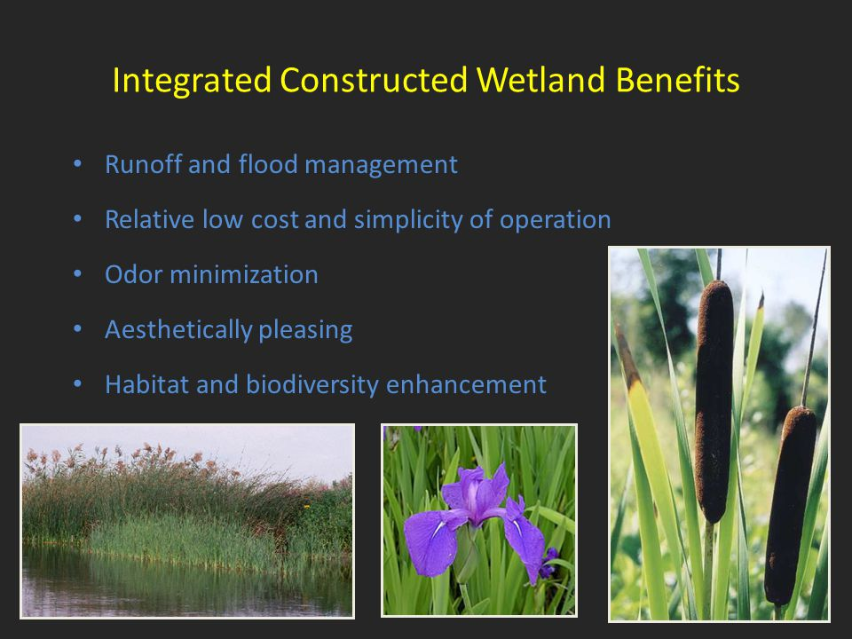 Integrated Constructed Wetland Benefits Runoff and flood management Relative low cost and simplicity of operation Odor minimization Aesthetically plea