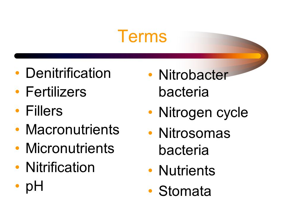Terms Denitrification Fertilizers Fillers Macronutrients Micronutrients Nitrification pH Nitrobacter bacteria Nitrogen cycle Nitrosomas bacteria Nutrients Stomata