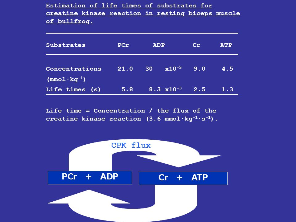 CPK flux PCr + ADP Cr + ATP Estimation of life times of substrates for creatine kinase reaction in resting biceps muscle of bullfrog. Substrates PCr A