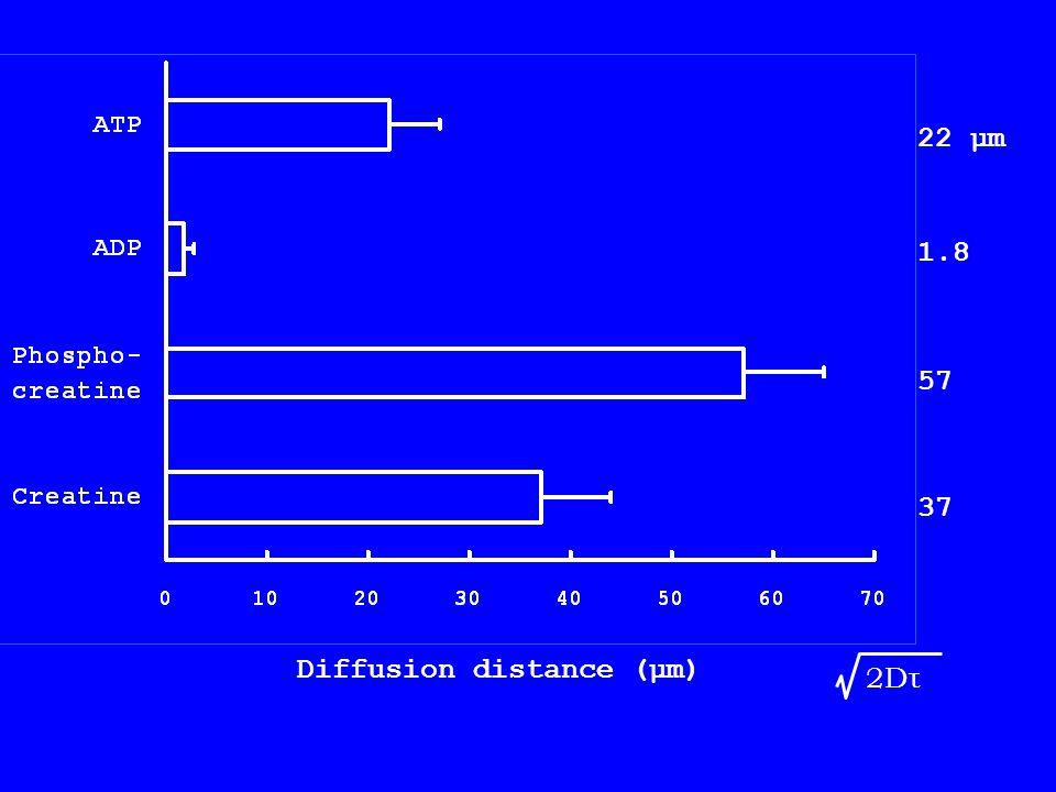 Diffusion distance (μm) 22 μm 1.8 57 37 2Dτ