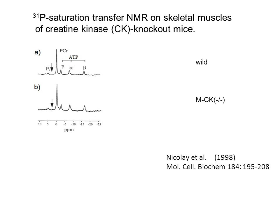 Nicolay et al. (1998) Mol. Cell. Biochem 184: 195-208 31 P-saturation transfer NMR on skeletal muscles of creatine kinase (CK)-knockout mice. wild M-C