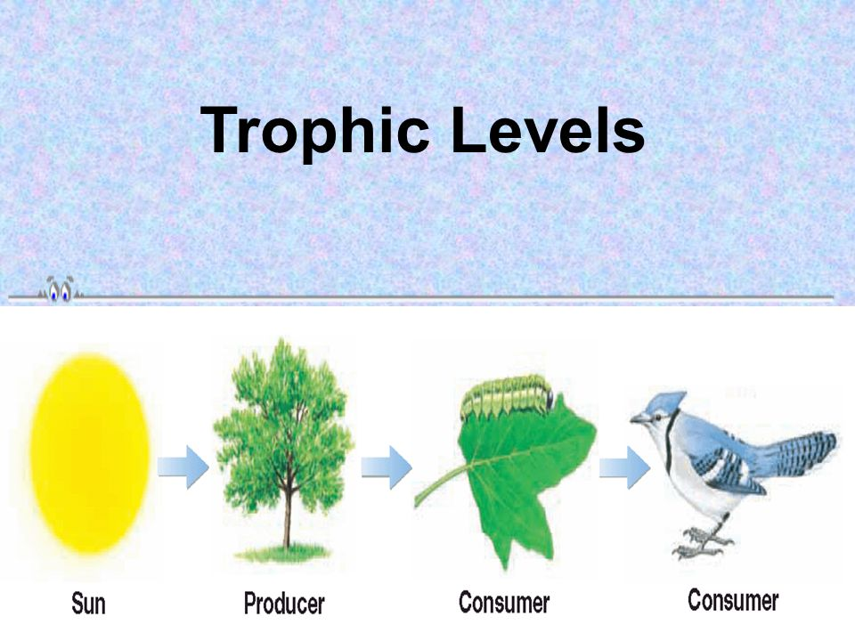 Trophic Levels Ecologists study how energy moves through an ecosystem by assigning organisms in that ecosystem to a specific level, called a trophic l