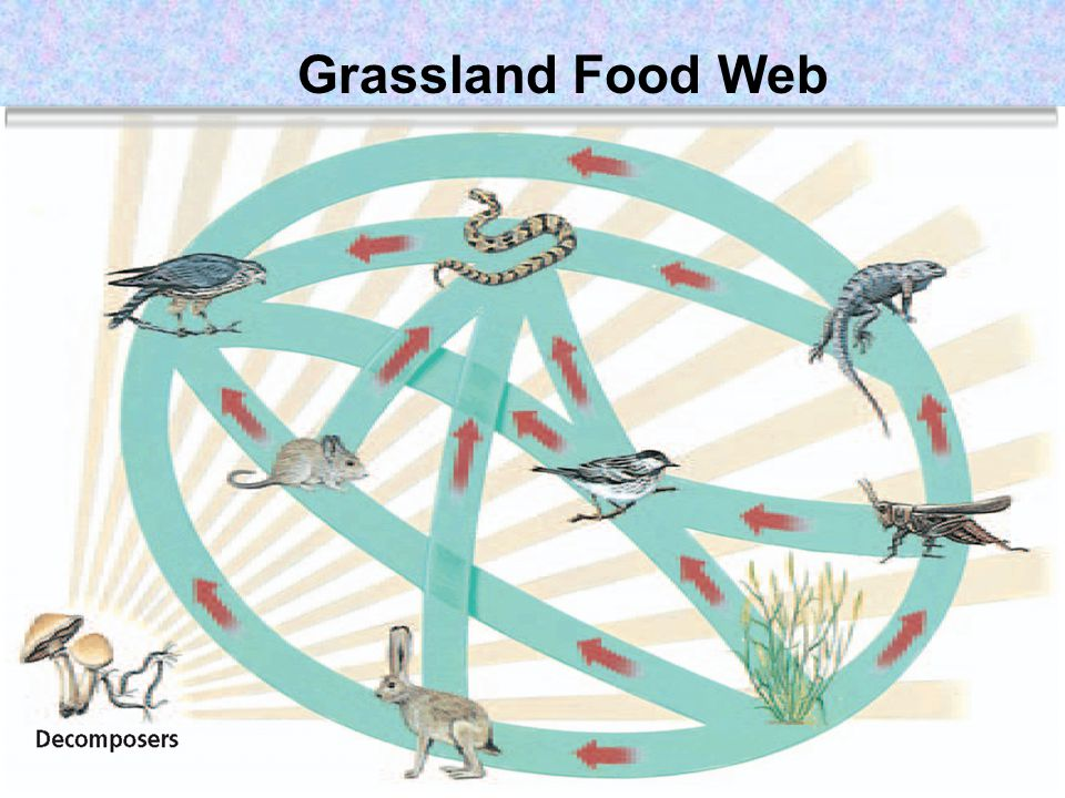 Food Web in an Antarctic Ecosystem
