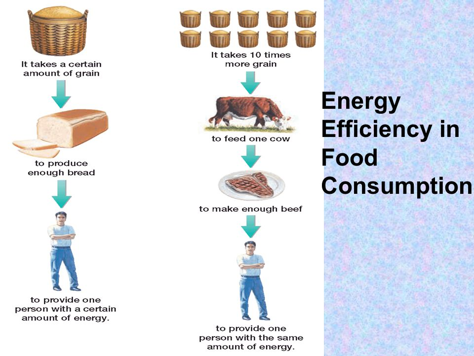 Energy Transfer Through Trophic Levels