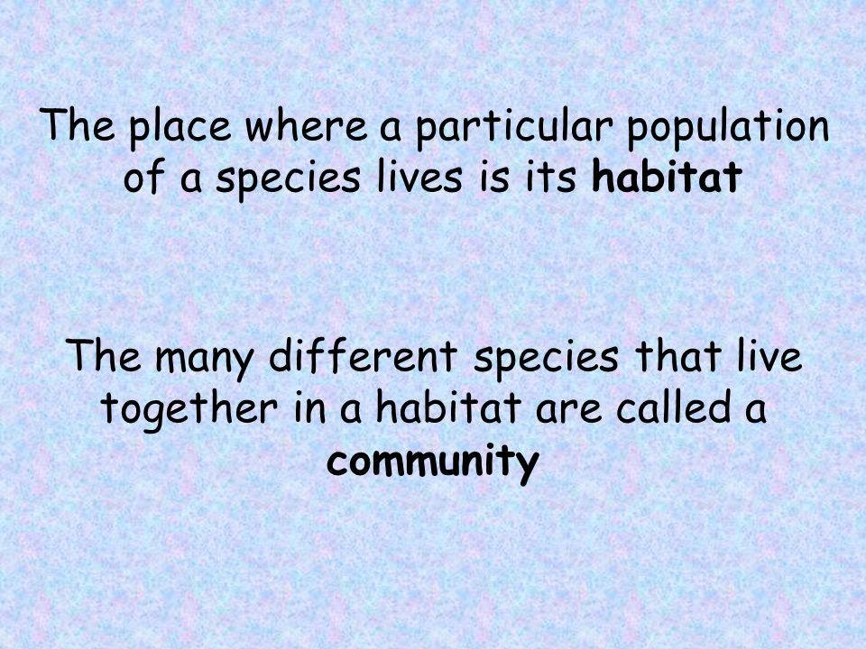 Ecology is the study of the interactions of living organisms with one another and with their physical environment (soil, water, climate, and so on).